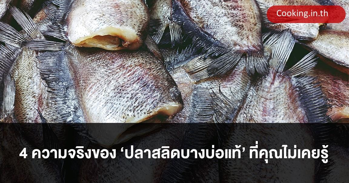 ปลาสลิดบางบ่อแท้